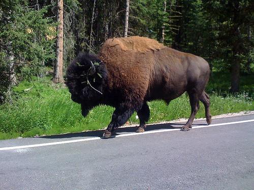 Montana: July 2010